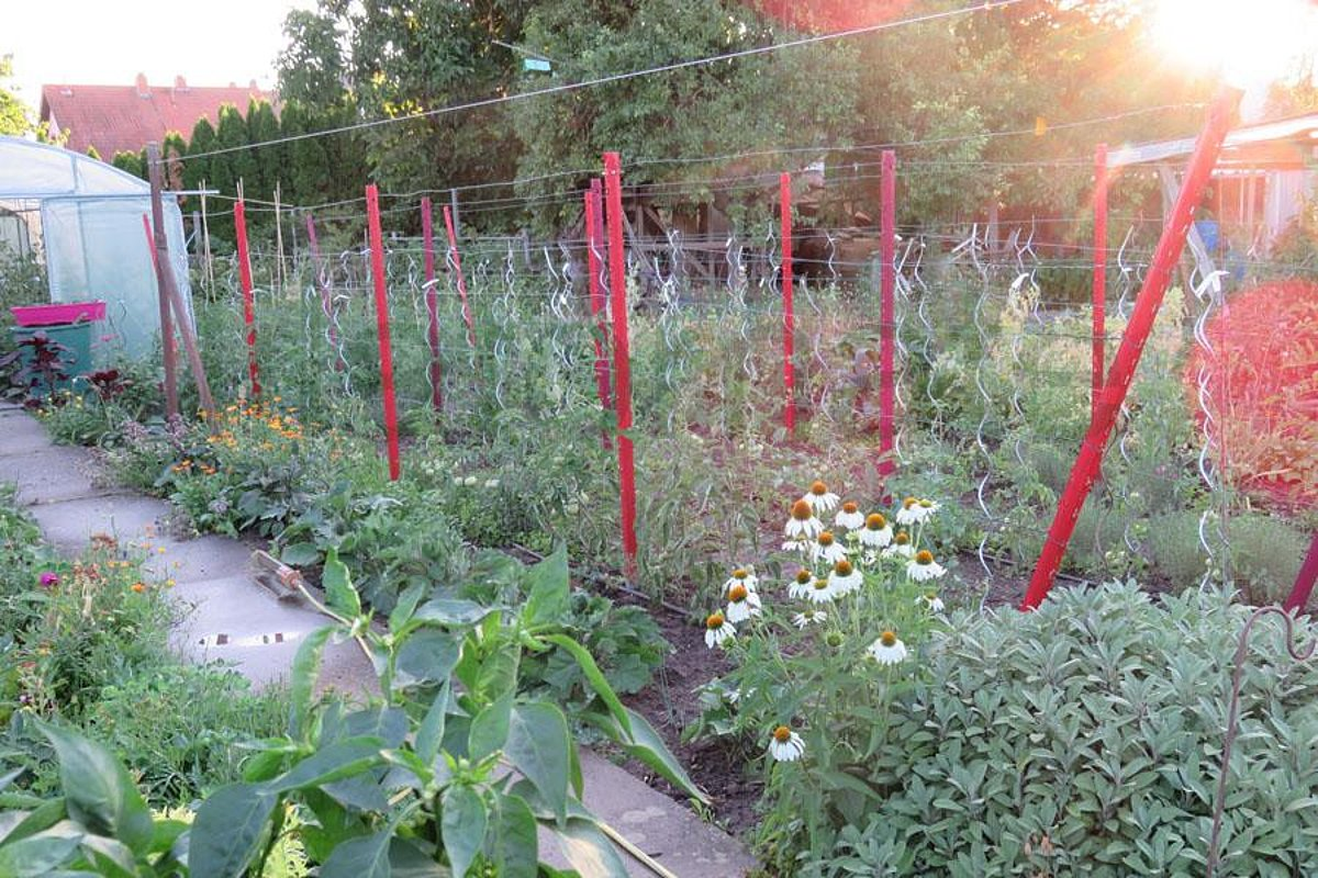 Was macht man mit tomatenpflanzen im herbst