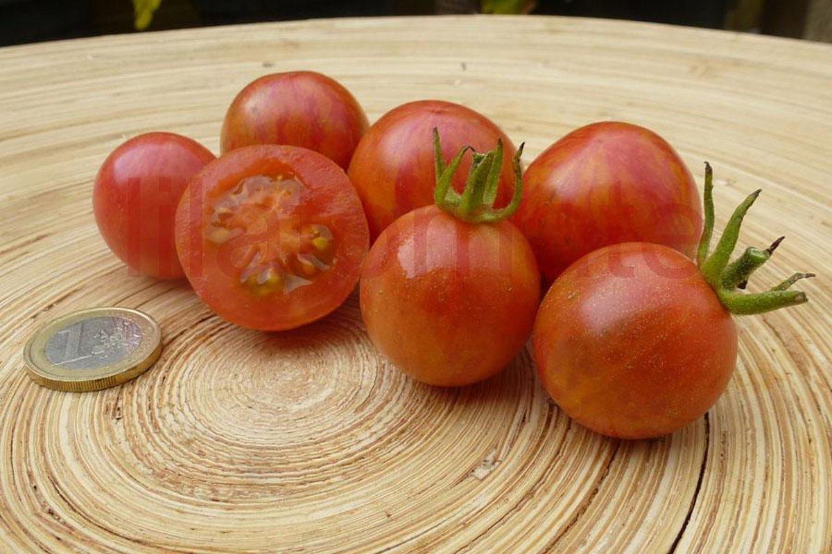 Lila Tomate